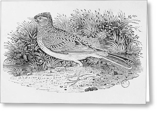 Heathland Greeting Cards - The Skylark Alauda Arvensis From The History Of British Birds Volume I, Pub. 1797 Wood Engraving Greeting Card by Thomas Bewick
