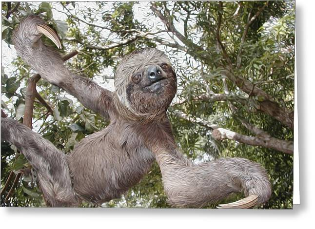 Tree Huggers Greeting Cards - The Sloth  A Real Tree Hugger Greeting Card by Bruce Stanfield