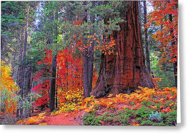 Kings Canyon Greeting Cards - The Small and the Mighty Greeting Card by Lynn Bauer