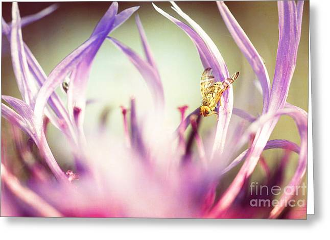 Spring Pastels Greeting Cards - The Small Visitor Greeting Card by Hannes Cmarits