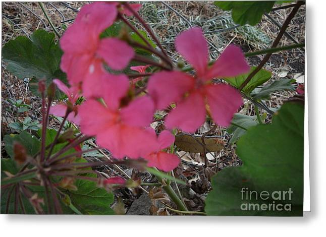 Could Reach Greeting Cards - The Smile Of Nature Greeting Card by Martin Bulinya