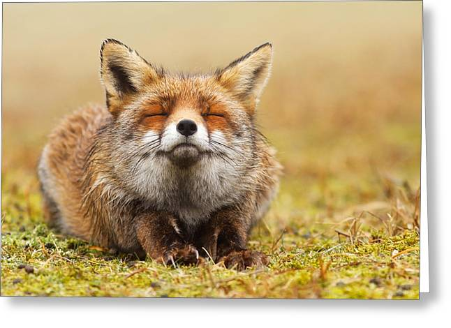 Stretched Greeting Cards - The Smiling Fox Greeting Card by Roeselien Raimond