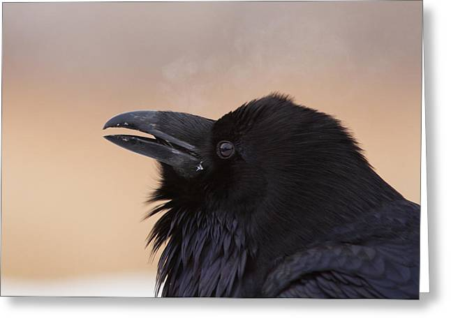 Corax Greeting Cards - The Smoker Greeting Card by Mircea Costina Photography