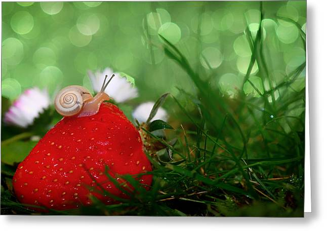 Ground Level Greeting Cards - The Snail and the Strawberry Greeting Card by Mountain Dreams