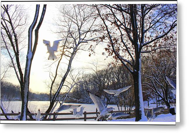 Blizzard Scenes Greeting Cards - The  Birds of Winter Greeting Card by  Photographic Art and Design by Dora Sofia Caputo