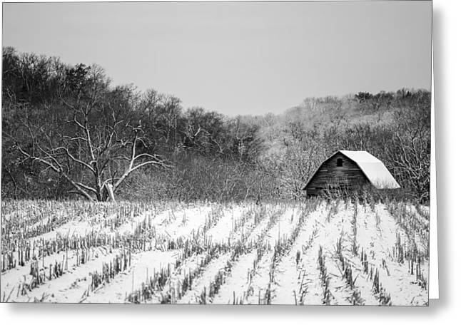 Unpainted Greeting Cards - The Snowy Aftermath in Black and White Greeting Card by Todd Klassy