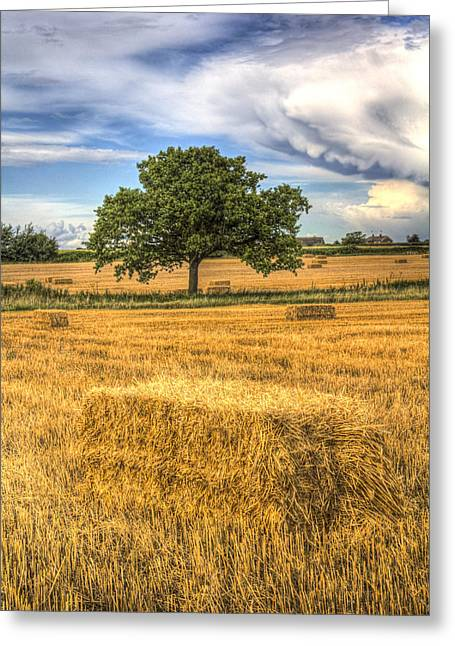 Farmers Field Greeting Cards - The solitary farm tree Greeting Card by David Pyatt