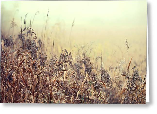 Book Cover Art Greeting Cards - The Song of Autumnal Grass Greeting Card by Jenny Rainbow