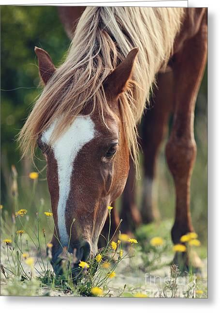 Shadow Horse Studios Greeting Cards - The Sorrel Stallion No. 3 Greeting Card by Lyndsey Warren
