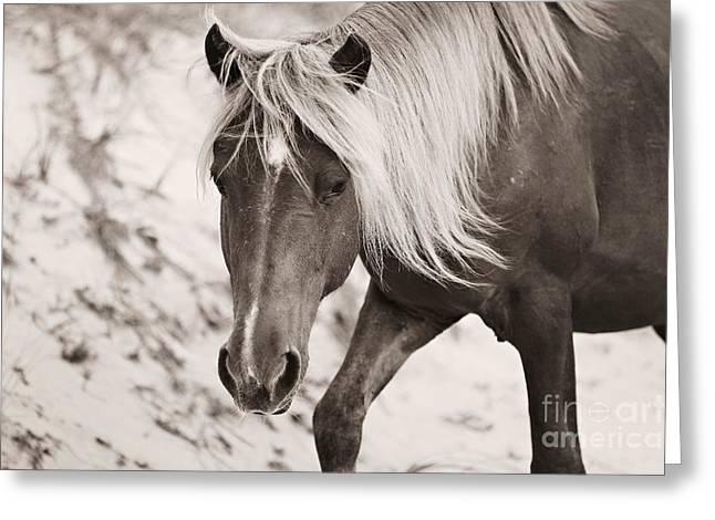 Shadow Horse Studios Greeting Cards - The Sorrel Stallion No1 BW Greeting Card by Lyndsey Warren