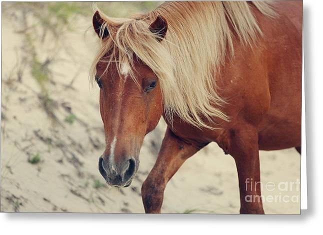 Shadow Horse Studios Greeting Cards - The Sorrel Stallion No.1 Greeting Card by Lyndsey Warren