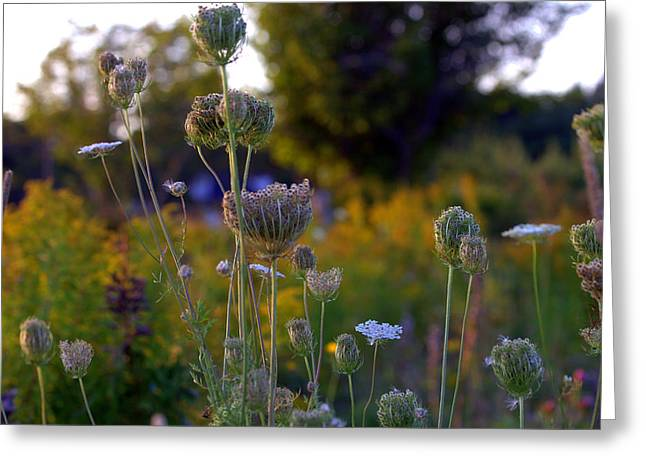 Somes Sound Greeting Cards - The Sound of Wild Carrots Greeting Card by Glenn Curtis