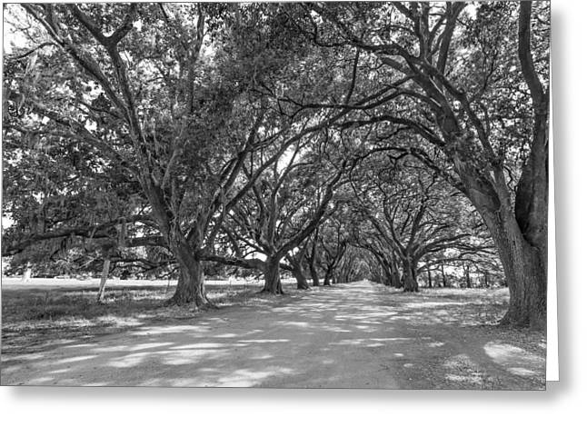 Evergreen Plantation Photographs Greeting Cards - The Southern Way bw Greeting Card by Steve Harrington