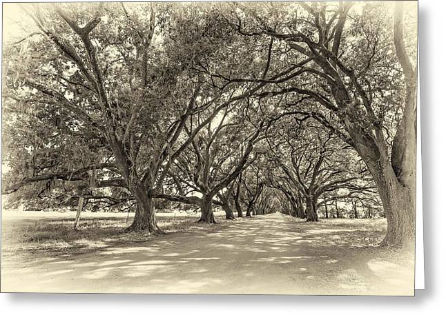 Slaves Greeting Cards - The Southern Way sepia Greeting Card by Steve Harrington