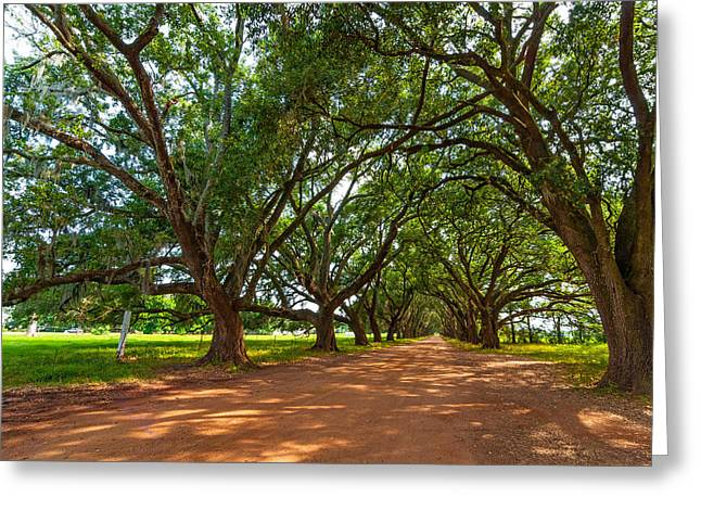 Evergreen Plantation Photographs Greeting Cards - The Southern Way  Greeting Card by Steve Harrington