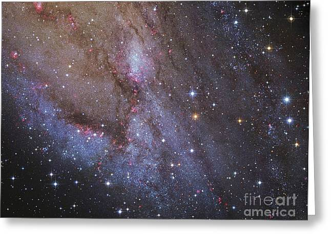 Twinkle Greeting Cards - The Southwest Spiral Arm Of Messier 31 Greeting Card by Robert Gendler