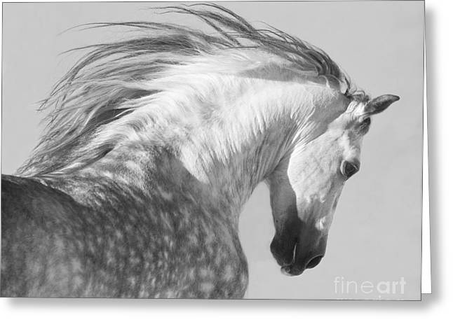 Wild Horses Greeting Cards - The Spanish Stallion Tosses His Head Greeting Card by Carol Walker