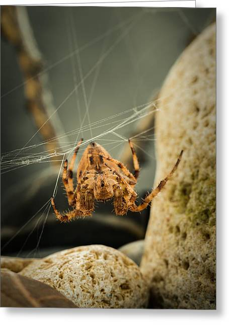 Spider Rock Art Greeting Cards - The Spectacular Spider I Greeting Card by Marco Oliveira