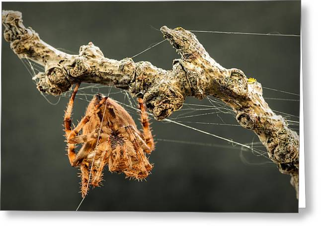 Big Spider Greeting Cards - The Spectacular Spider II Greeting Card by Marco Oliveira