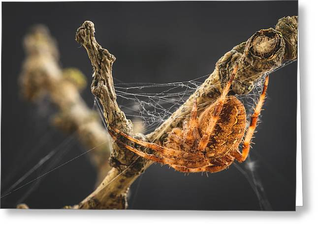 Bug Eyed Monster Greeting Cards - The Spectacular Spider III Greeting Card by Marco Oliveira