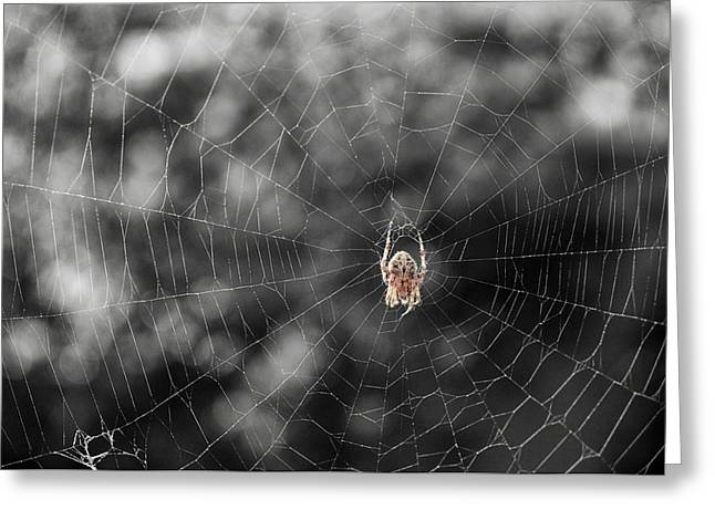 Spun Web Greeting Cards - The Spider Greeting Card by Mary Lee Dereske