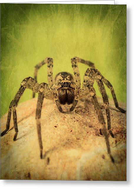 Big Spider Greeting Cards - The Spider Series X Greeting Card by Marco Oliveira