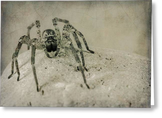 Big Spider Greeting Cards - The Spider Series XI Greeting Card by Marco Oliveira