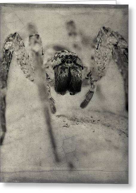 Big Spider Greeting Cards - The Spider Series XII Greeting Card by Marco Oliveira
