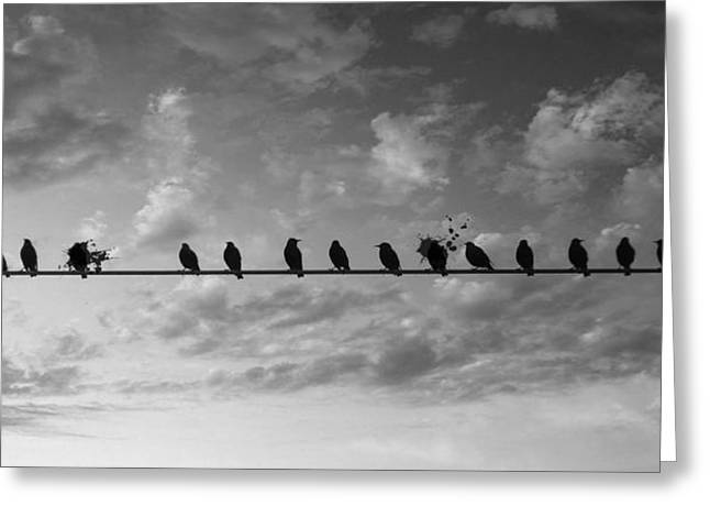 Bird On A Wire Greeting Cards - The Splatting Six Greeting Card by Jerry Cordeiro