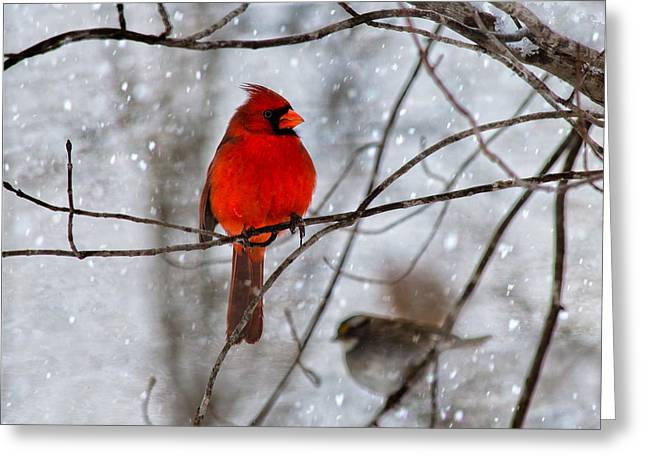 Sit-ins Greeting Cards - Blue Eyes in the Snow Cardinal  Greeting Card by Betsy A  Cutler