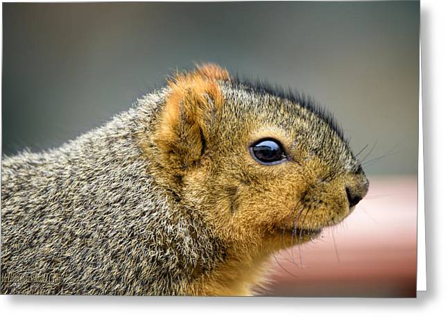 Sciurus Carolinensis Greeting Cards - The Squirrel Greeting Card by LeeAnn McLaneGoetz McLaneGoetzStudioLLCcom