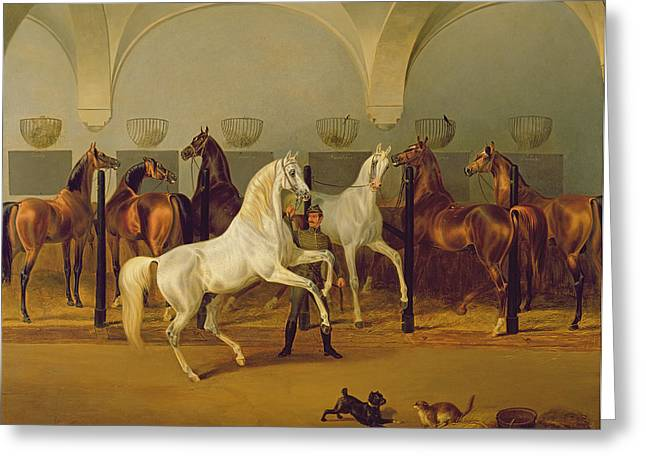 Groomed Greeting Cards - The Stables At Babolna, 1849 Greeting Card by Otto Stotz