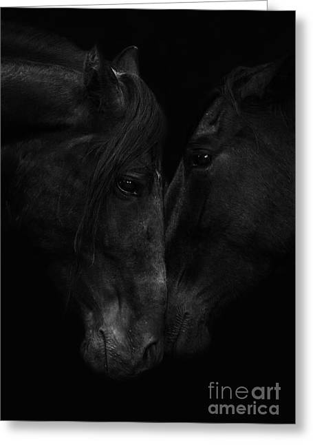 Andalusian Greeting Cards - The Stallion and the Mare Greeting Card by Carol Walker