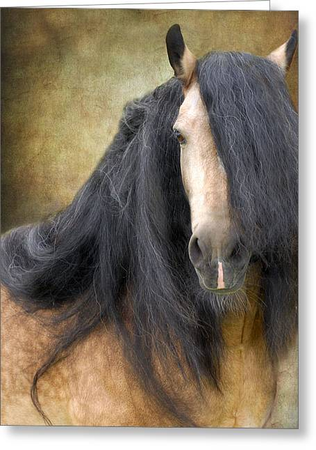 The Stallion Greeting Card by Fran J Scott