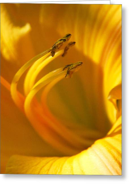 The Stamen Greeting Card by Linda Segerson