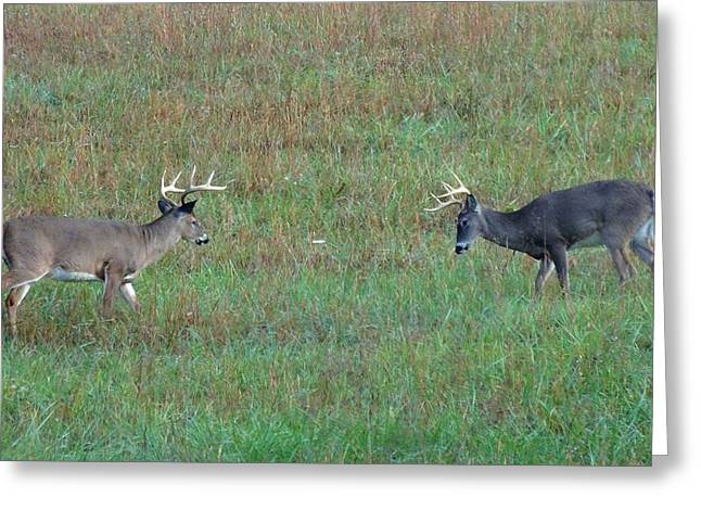 Tennesee Greeting Cards - The Standoff In Cades Cove Greeting Card by Dan Sproul