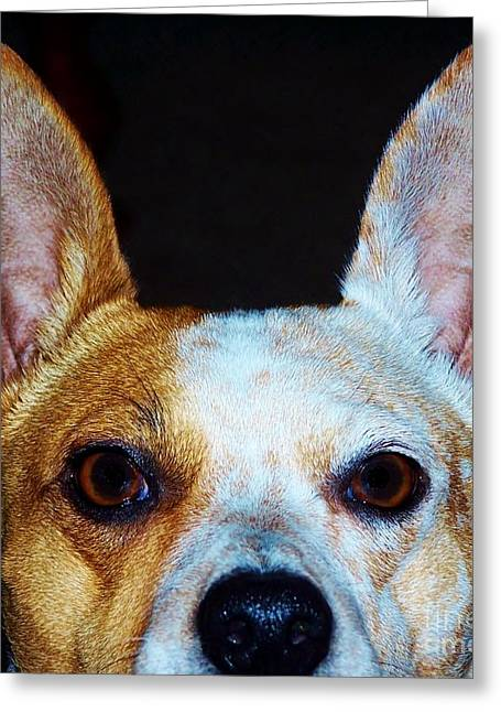 Doggies Greeting Cards - The Stare  Greeting Card by Brigitte Emme
