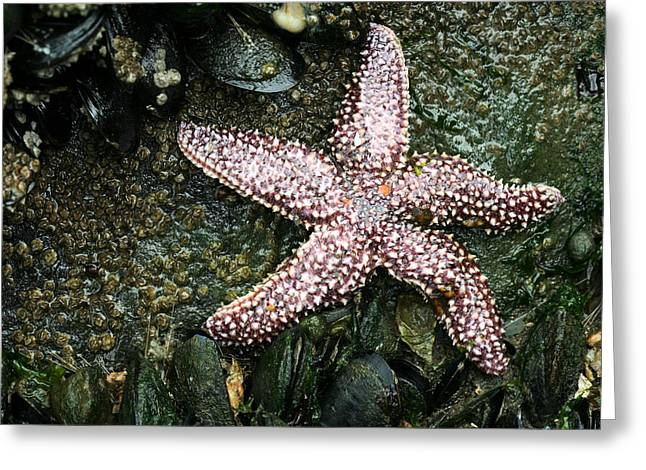 The Starfish  Greeting Card by JC Findley