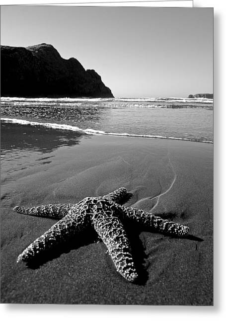 Oregon Coast Greeting Cards - The Starfish Greeting Card by Peter Tellone