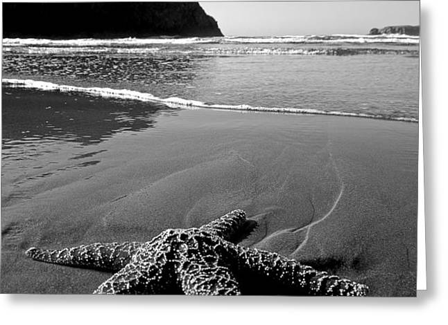 The Starfish Greeting Card by Peter Tellone