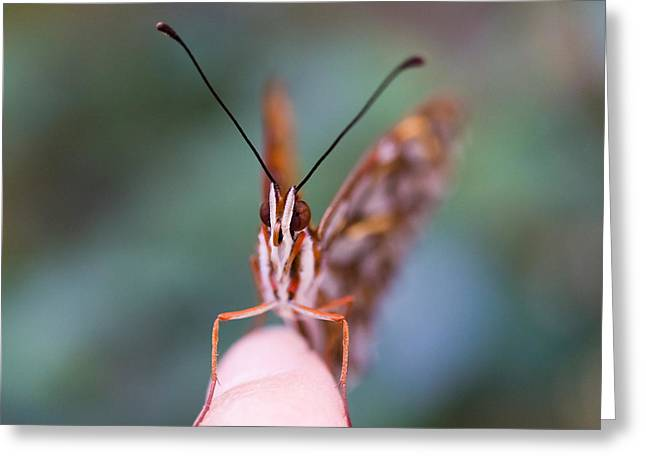 Lepidopterist Greeting Cards - The Staring Contest Greeting Card by Priya Ghose