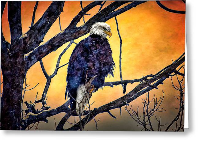 The Staring Eagle Greeting Card by Gary Smith