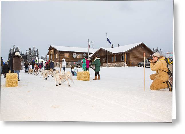 Dog Sled Racing Greeting Cards - The Start of a Sled Dog Race Greeting Card by Tim Grams