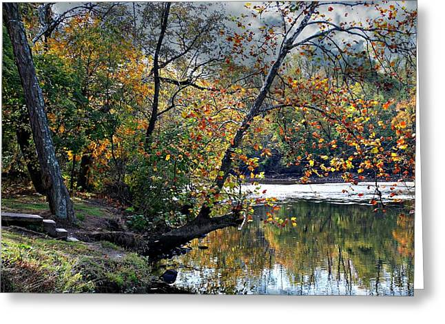 Stein Greeting Cards - The Steps into the Creek. Greeting Card by Valerie Stein