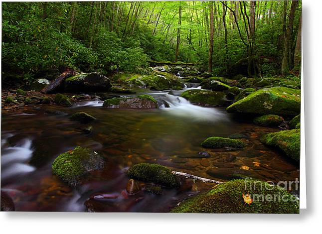 Flowing Stream Greeting Cards - The Streams Touch Greeting Card by Michael Eingle