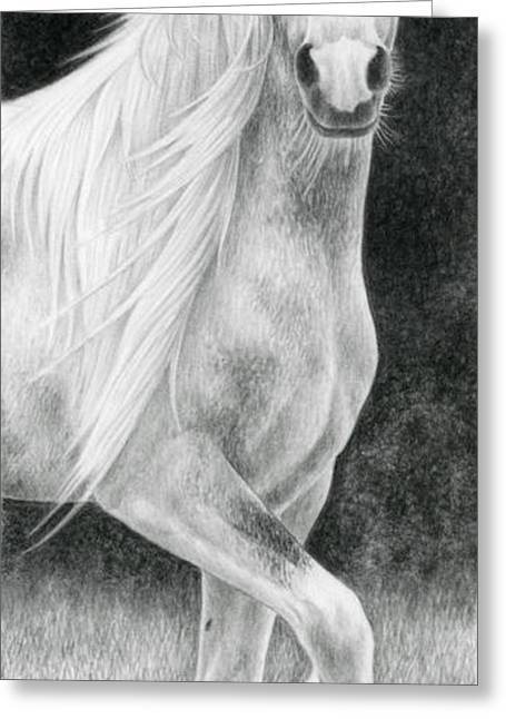 Gypsy Vanner Horse Greeting Cards - The Stuff of Fairy Tales Greeting Card by Katherine Plumer