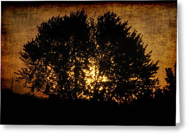 Frederico Borges Photographs Greeting Cards - The sun behind the tree Greeting Card by Frederico Borges