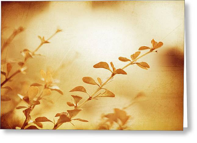 The Sun Descending Greeting Card by Carolyn Cochrane