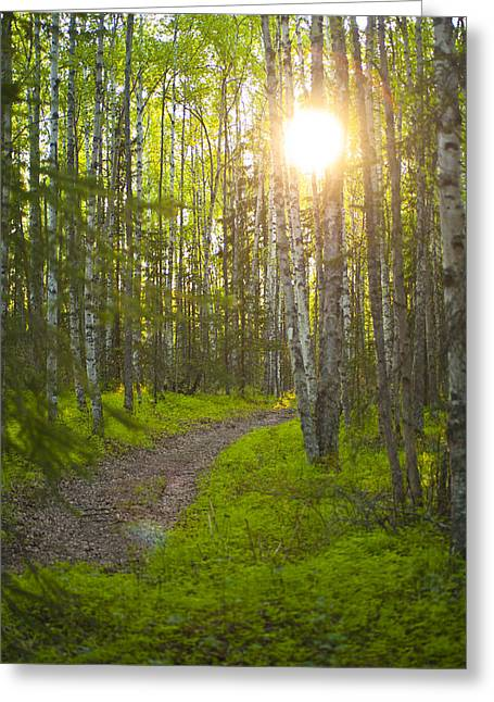 Bicentennial Greeting Cards - The Sun Setting Behind Trees And Over A Greeting Card by Michael Jones