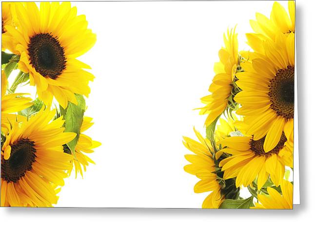 Flower Boxes Pyrography Greeting Cards - The Sunflower Greeting Card by Boon Mee